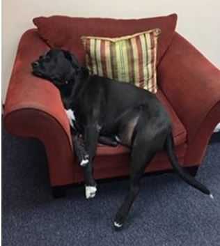 Justice, resident therapy dog at Miami RJDC.